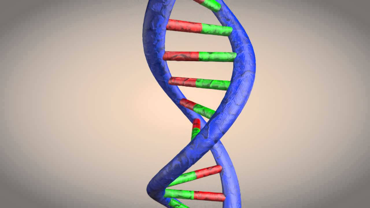 deoxyribonucleic acid dna Dna, or deoxyribonucleic acid, is the central information storage system of most animals and plants, and even some viruses the name comes from its structure, which is a sugar and phosphate backbone which have bases sticking out from it--so-called bases.